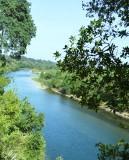 American River through trees