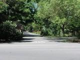 Carmichael Neighborhood Trees