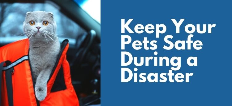 Keep Your Pets Safe During a Disaster